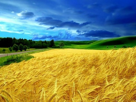 ecology-of-ukraine