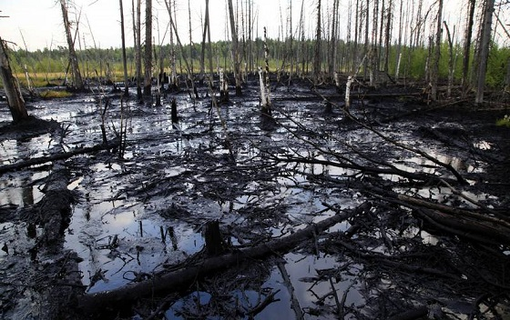 Oil spill in Western Siberia (Surgut region) found during Greenpeace investigation tour in August 2011.