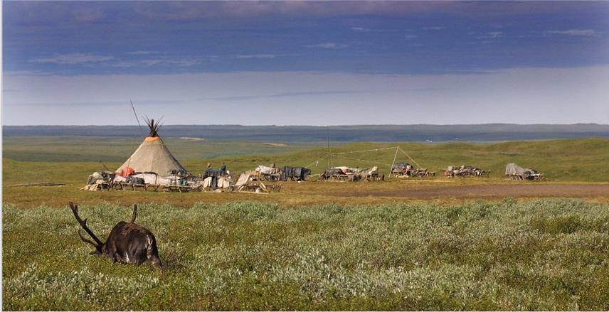 ecology-problem-of-tundra