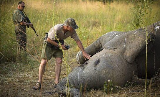 Проблема браконьерства