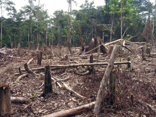 Реферат на тему экологические проблемы австралии 8419