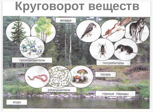 krugovorot-veshestv-v-prirode