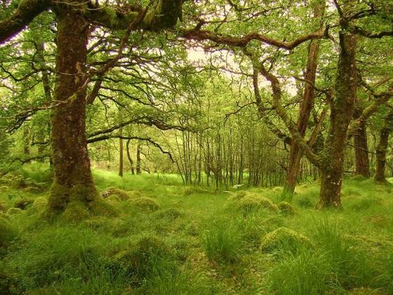 zhestkolistvennie-lesa