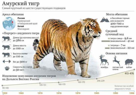 Животные красной книги россии амурский тигр доклад 6238