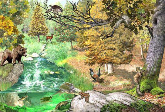 Биогеоценоз смешанного леса