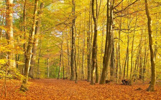Описание лиственного леса