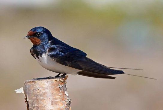 Птицы которые прилетают летом