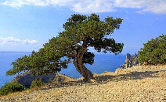 Природа, растения и животные Крыма
