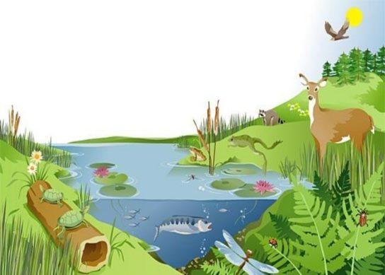 Виды экосистем в природе