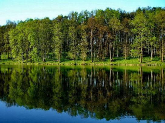 природа Тульской области