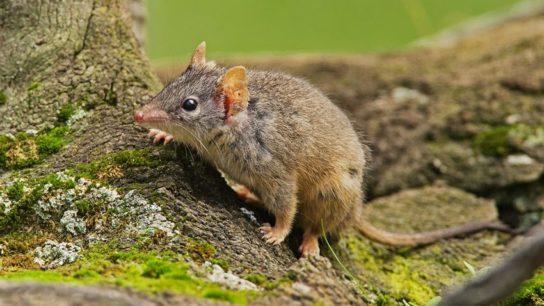 чем питаются мыши - фото 3
