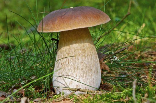 питание разных видов грибов