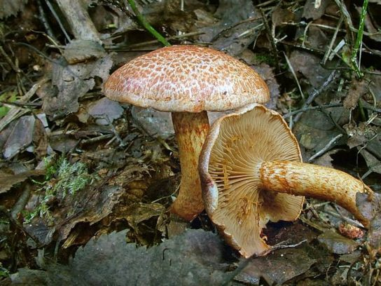 Ядовитые грибы и растения калужской области