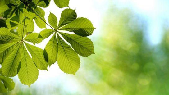 Описание листьев деревьев