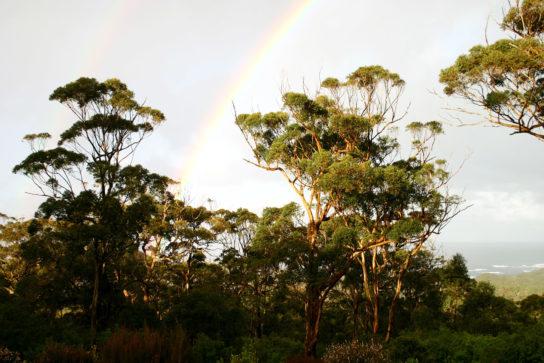 дерево карри - фото 1