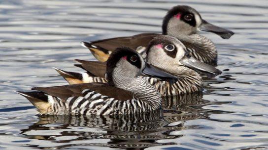 чем питаются птицы - фото 15