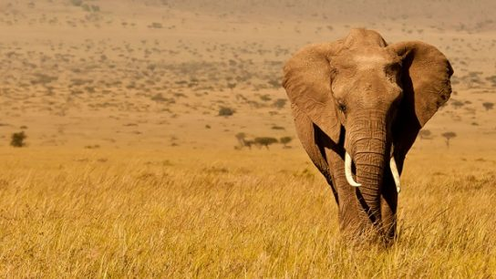 Боится ли слон мышей- картинка 3