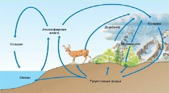 Круговорот кислорода доклад биология 985