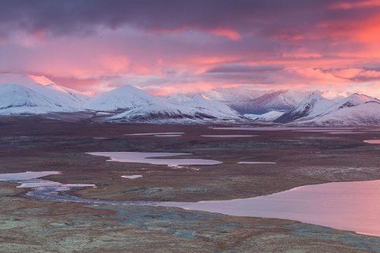 Арктическая тундра России – природная зона, животные и растения, климат, почва, описание