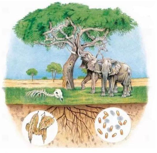 Какие факторы относятся к биотическим