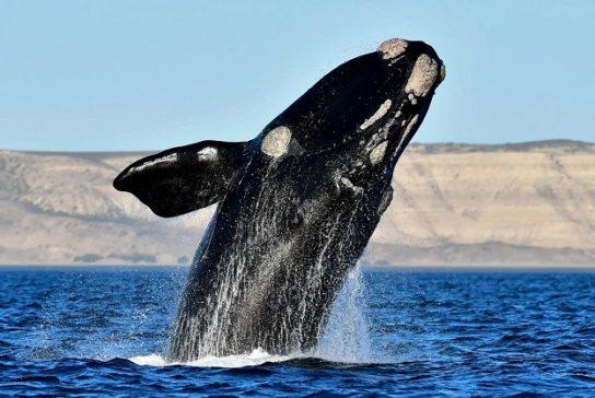 фото кита