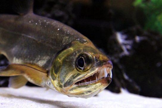 чем питаются рыбы - фото 7