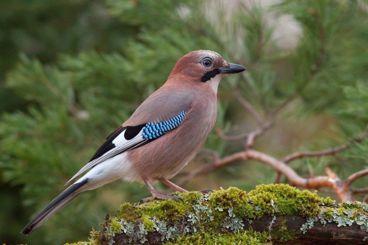 благодарность лесные птицы средней полосы фото с названиями чем приступит созданию