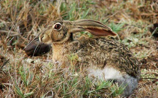 чем питается заяц - фото 4
