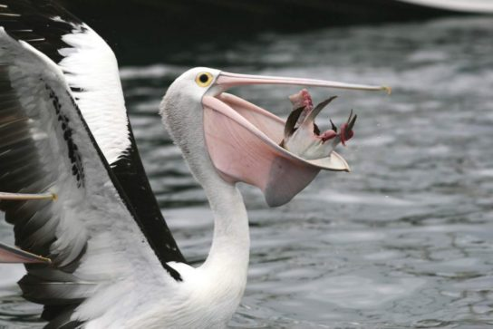 чем питаются птицы - фото 5