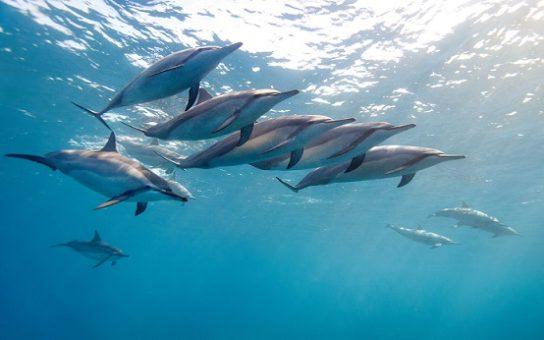 Почему киты и дельфины млекопитающие - картинка 7