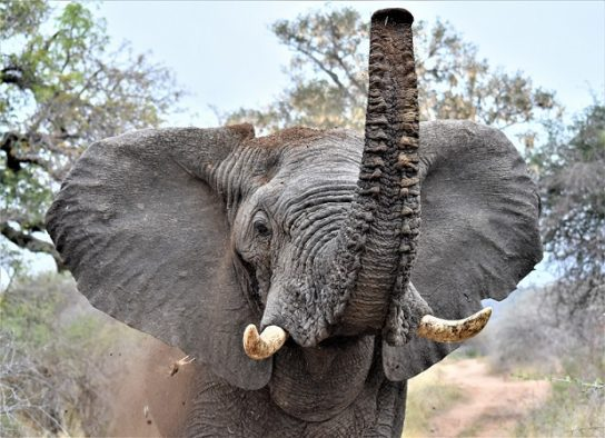 Боится ли слон мышей- картинка 1
