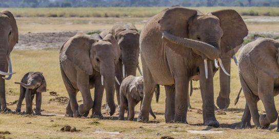 зачем слону хобот - картинка 9