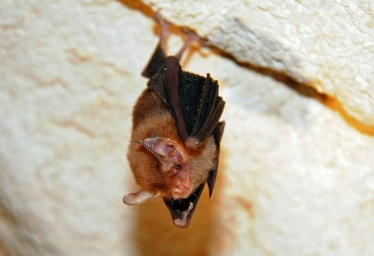 летучая мышь - фото