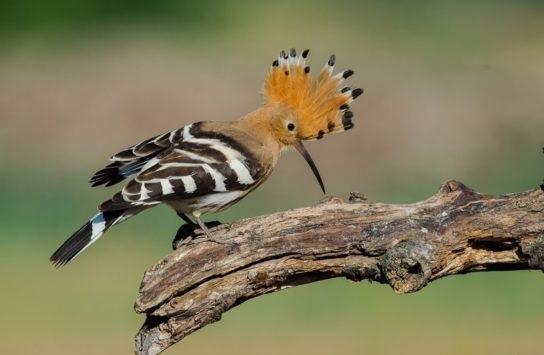 этой фото птиц с названиями в тольятти имеет полуострый