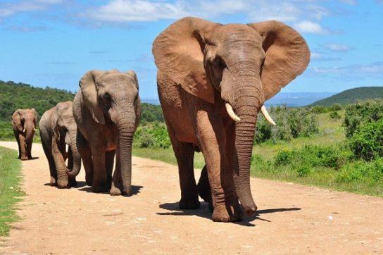 Боится ли слон мышей- картинка 2