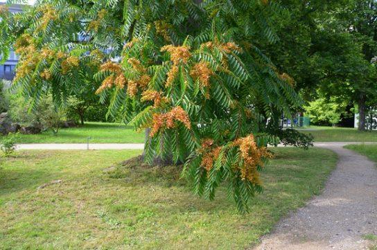 Какие бывают листики деревьев