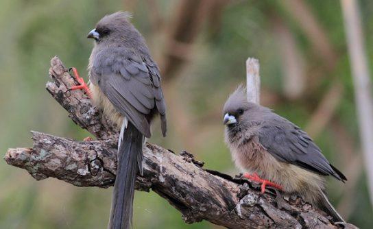чем питаются птицы - фото 16