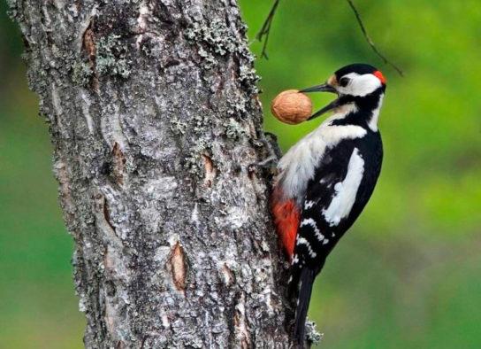 чем питаются птицы - фото 6