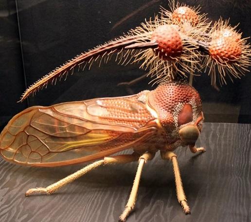 фото бразильской горбатки
