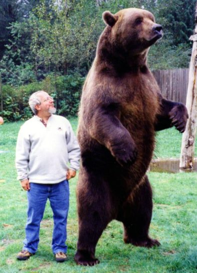 Сравнение роста человека и аляскинского медведя