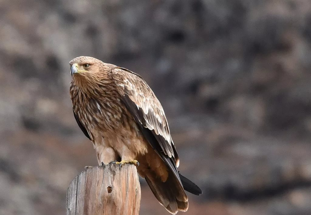 создать благоприятные хищные птицы ульяновской области маленький эльф