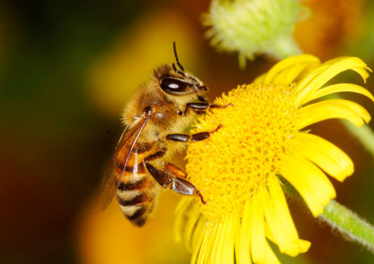 Питание пчел