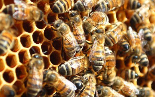 Образ жизни пчелы