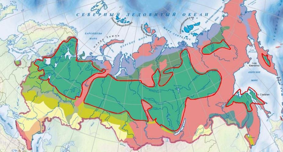 зона тайги на карте России