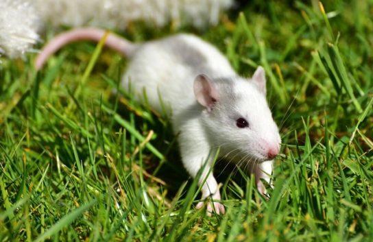 чем питаются мыши - фото 10