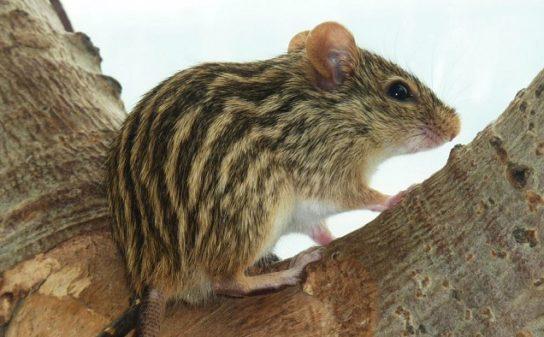 чем питаются мыши - фото 2
