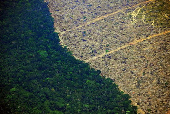 Вырубка лесов Амазонии со стороны Бразилии