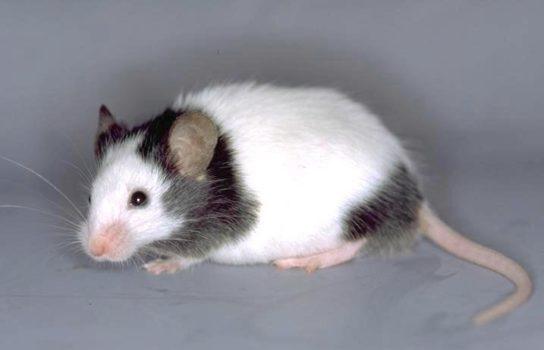 чем питаются мыши - фото 11