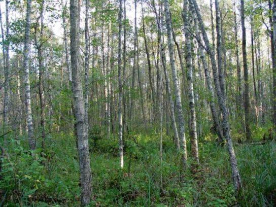 Мелколиственные леса России