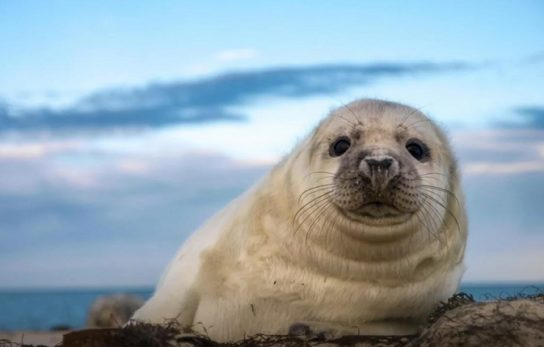 где обитают тюлени